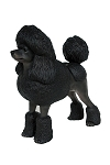 Poodle Dog Black