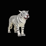 White Tiger Standing