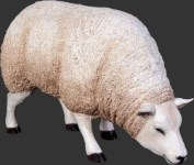 Sheep Head Down Life Size White Resin