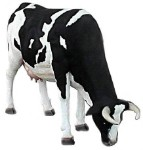 Life Size Cow Statue with Head Down! Over 7' Long!