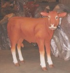 Brown Devon Life Size 4'  Calf  Display