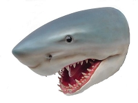 Great White Shark Head Wall Mount Life Size! ~ Large