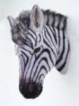 Zebra Head Wall Mount ~ Life Like ~ Realistic