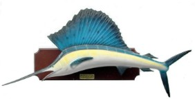 Large Sail Fish  5' Life Size Wall Mount