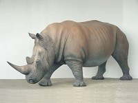 Rhinoceros (BIG)