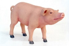 Pig Standing Life Size Resin Baby Pig Prop Display