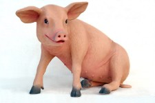 Pig Sitting Life Size Resin Baby Pig Prop Display