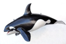 Orca Whale Small 4.25' Life Size Resin Prop Display