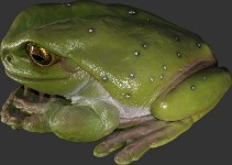 Giant Frog 3' Statue