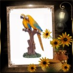 Blue Gold Macaw Lover