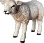 Life Size Sheep with Head Up