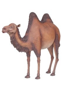 Camel Life Size 6' Resin Animal Statue