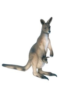 Kangaroo With Little Joey  2' Life Like Prop Display
